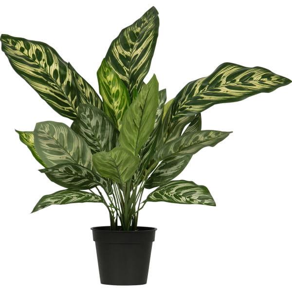 Künstliche Pflanze Aglaonema Grün 50cm