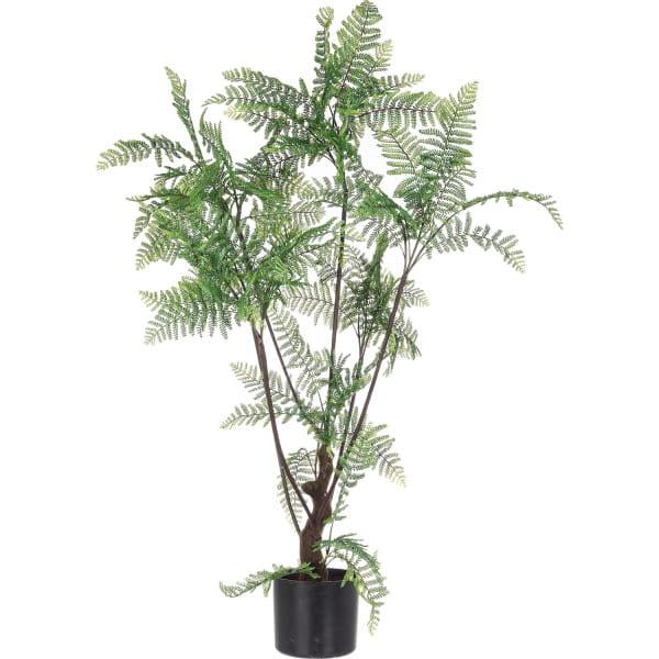 Pflanze Farn Höhe 108